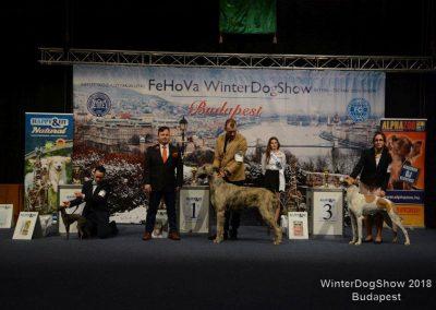 Dogshow Budapest3