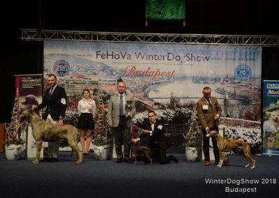 Dogshow Budapest4